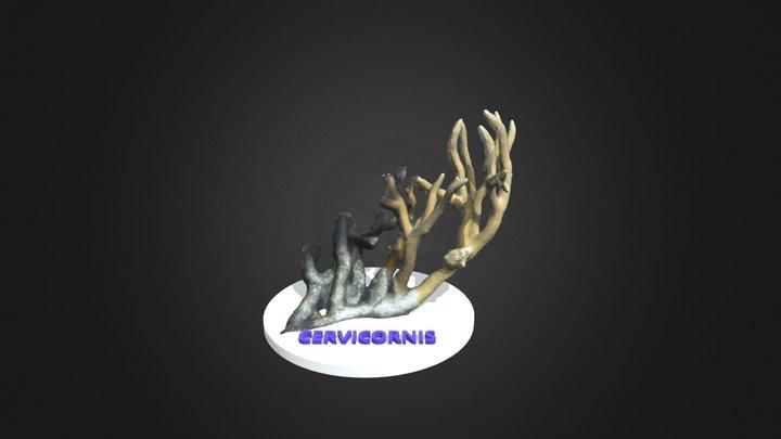 Cervicornis 3D Model