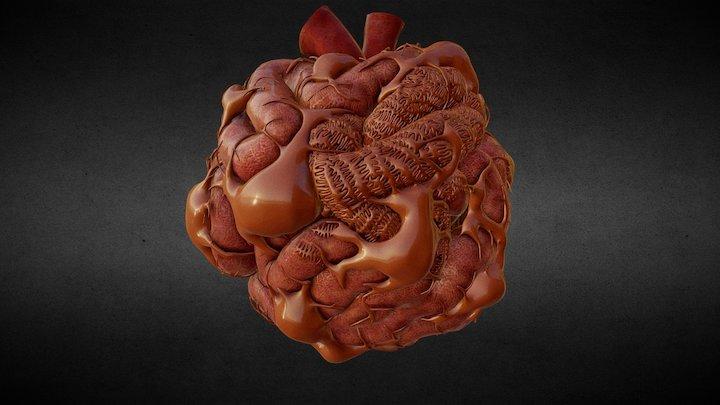 Glomerulus of the human kidney 3D Model