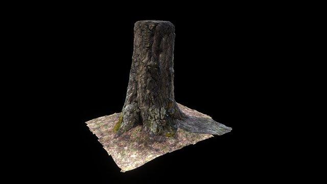 PhotogrammeTree Test 3D Model