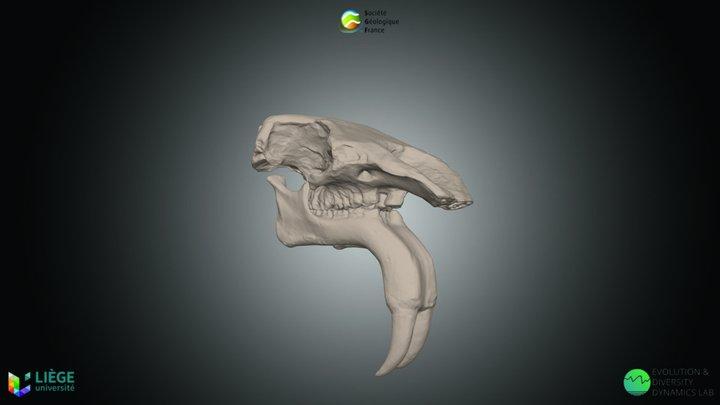 Proboscidien, Deinotherium giganteum 3D Model