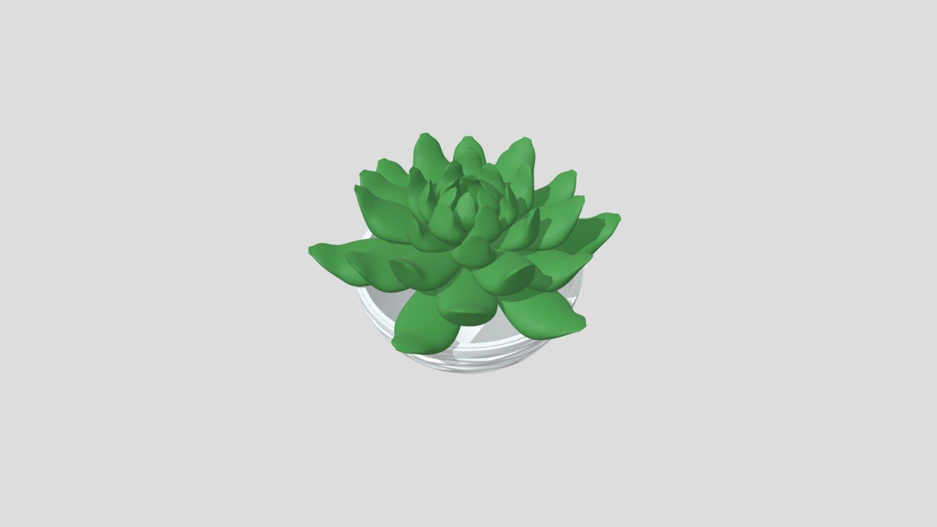 buying succulents online