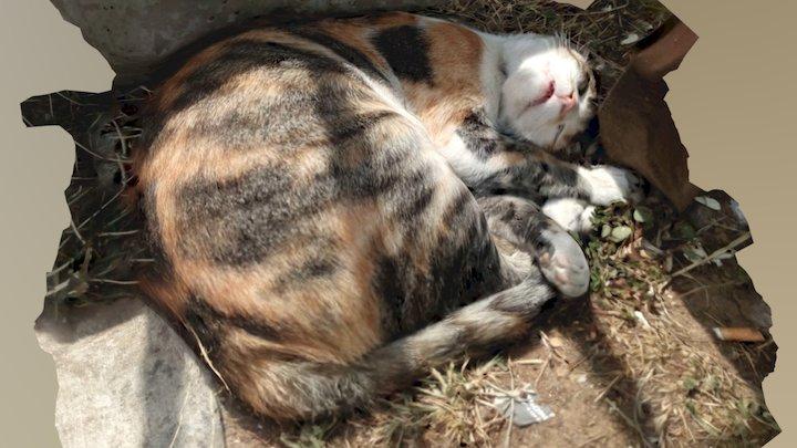 Uyuyan kedi - sleeping cat 3D Model