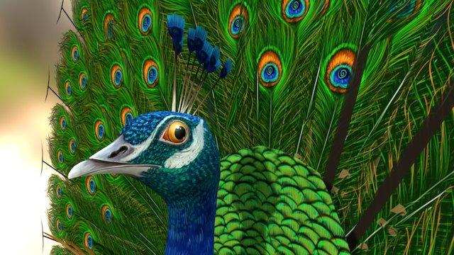 Peacock 3D Model