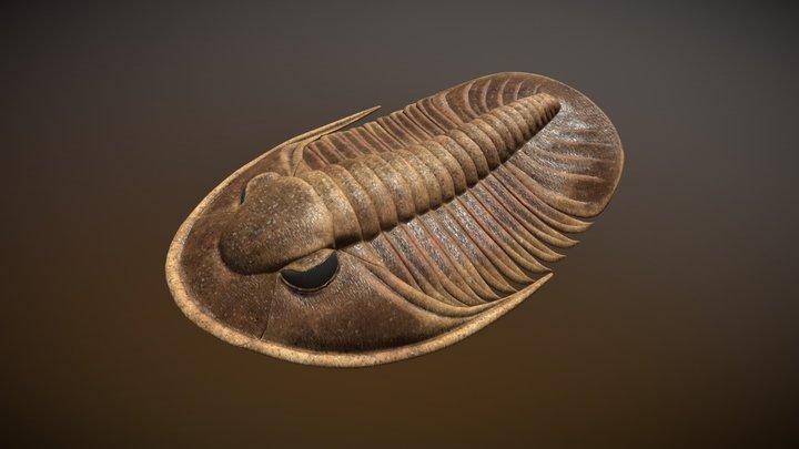 trilobite Decoroproetus coderus (ŠNADRr, 1980) 3D Model