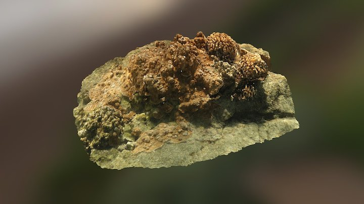 Bill Burns Coral Model 3D Model