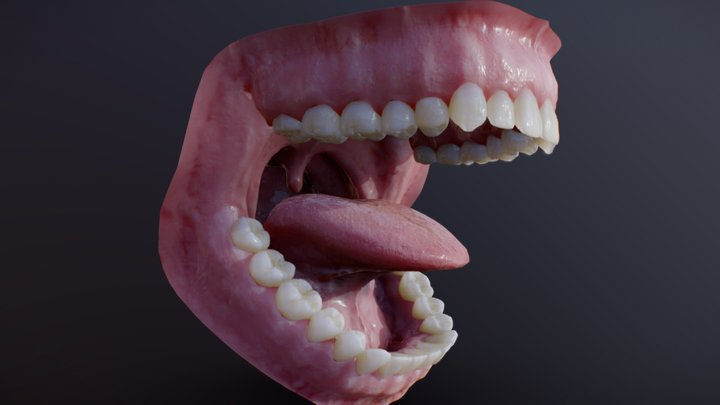 Photorealistic human mouth 3D Model