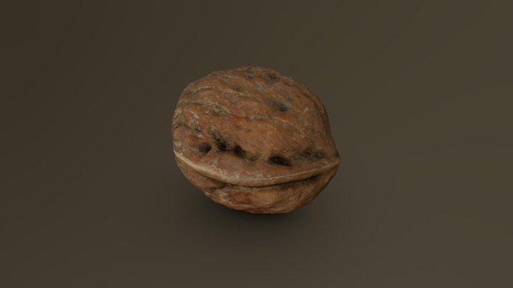 Walnut 15 3D Model