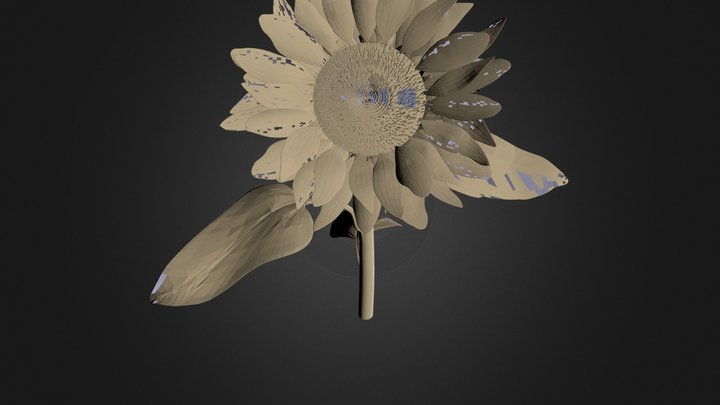 SunFlower.obj 3D Model