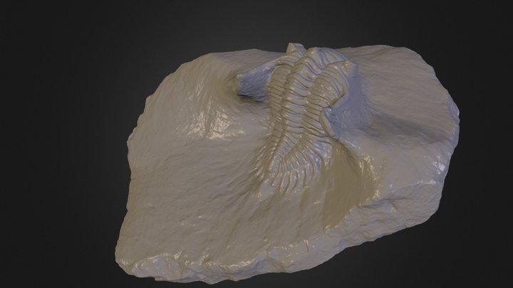 Fossil - 80% reduced (Vizup demo sample) 3D Model