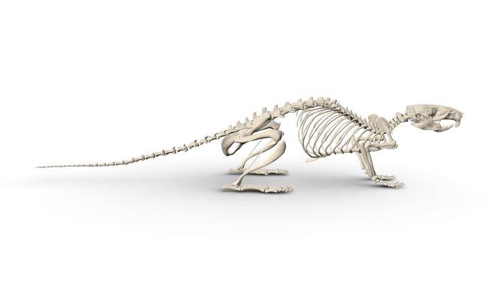 Rat Skeleton 3D Model