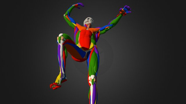 Form, Gesture, Anatomy Course Simplified Ecorche 3D Model