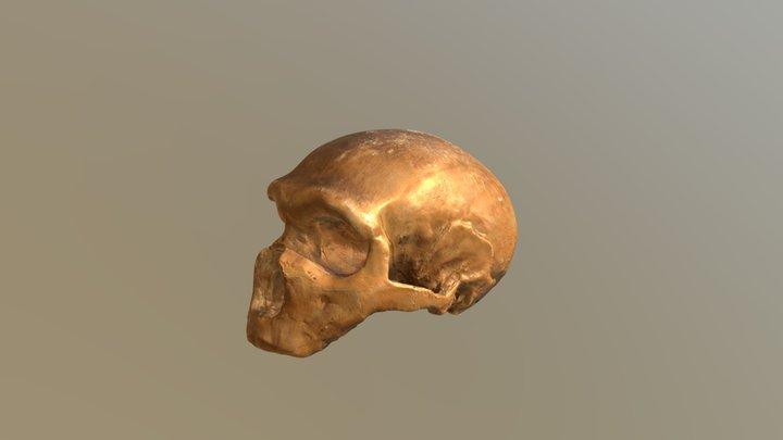 Monte Circeo I cranium 3D Model
