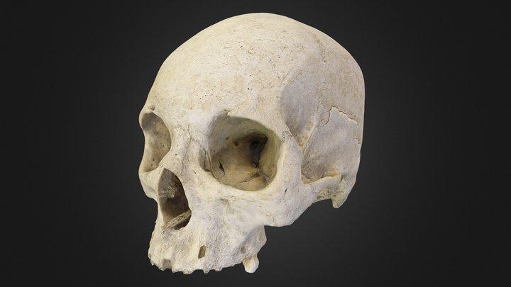 Scanned Human Skull 3D Model