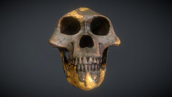 Australopithecus afarensis (Lucy) 3D Model