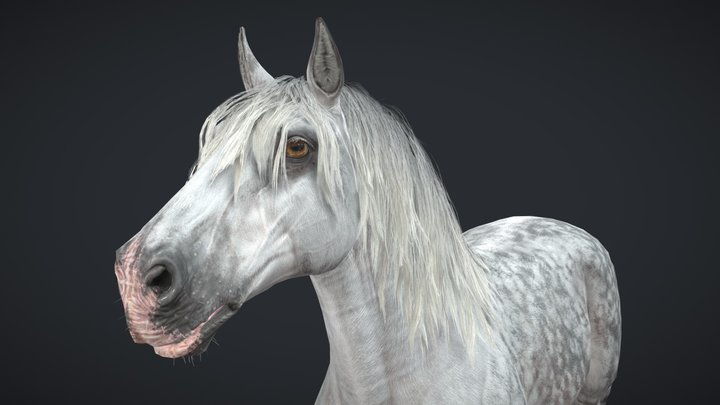 Horse - Game Ready 3D Model