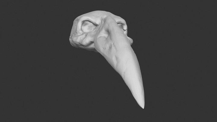 Stylized Skull 3D Model