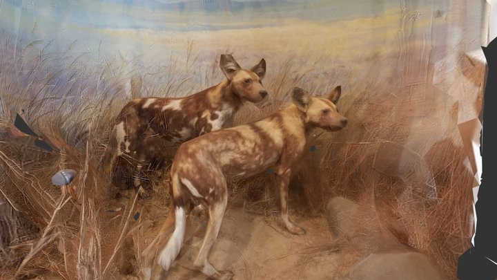 African Wild Dogs 3D Model