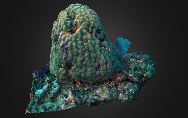 Coral Head Test 3D Model