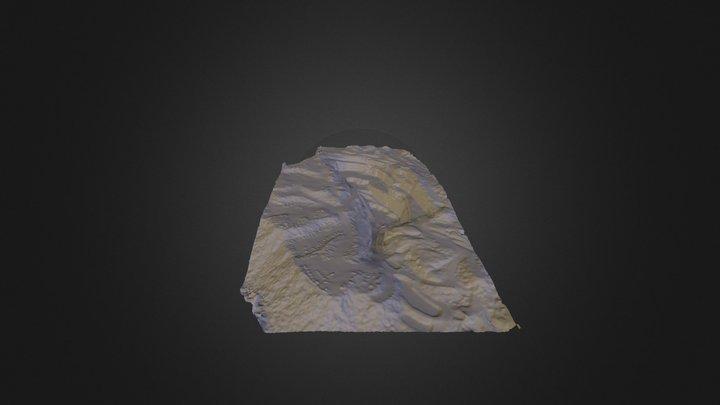 Cambrian_Faces3 3D Model