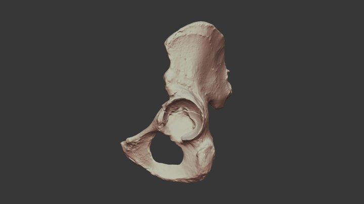 Human os coxae 3D Model