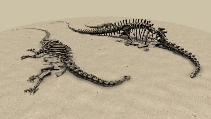 Diplodocus skeletons 3D Model