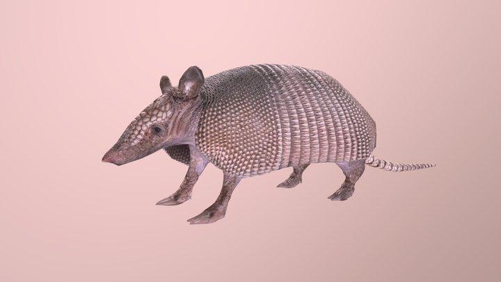 Armadillo 3D Model
