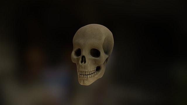 Skull - Skulls & Skeletons 3D Model