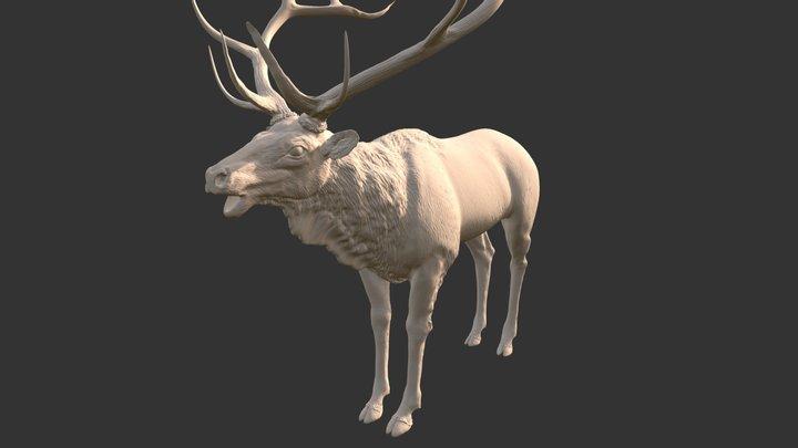 Elk_HP 3D Model