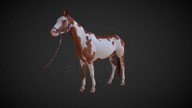 Horse - pose7 3D Model