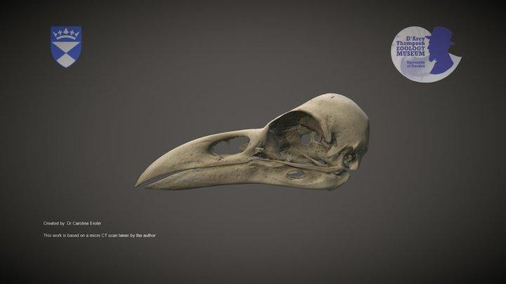 Raven skull 3D Model