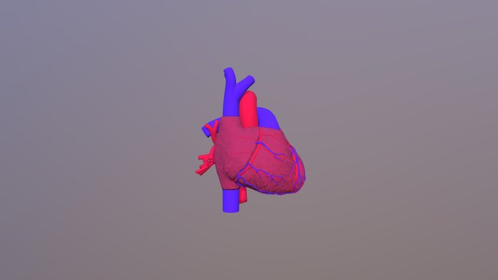 Heart with vessels 3D Model