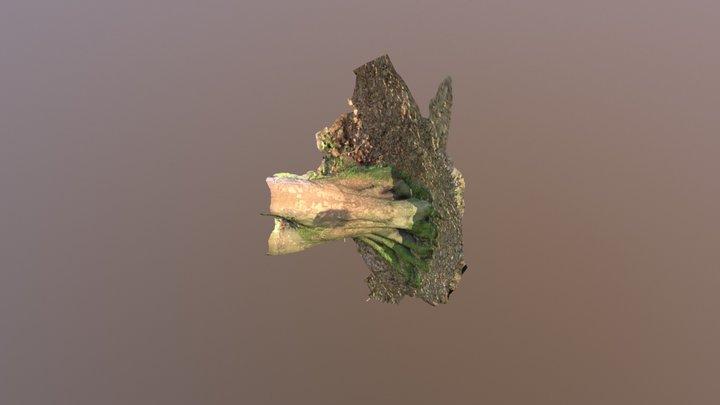 Tree piece 3D Model