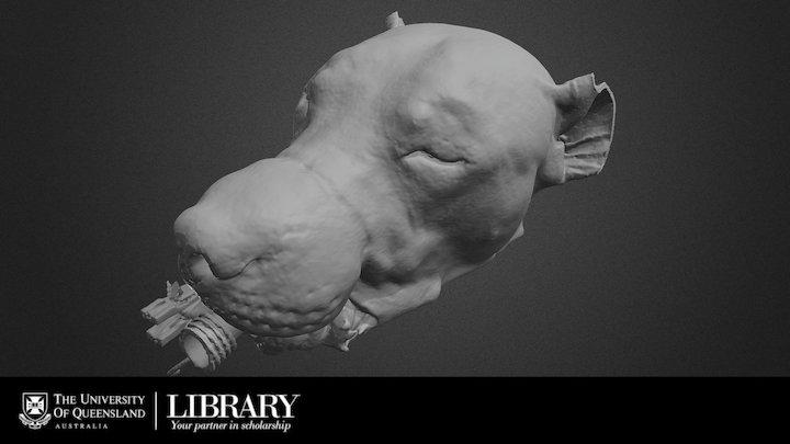Canine Skin 3D Model