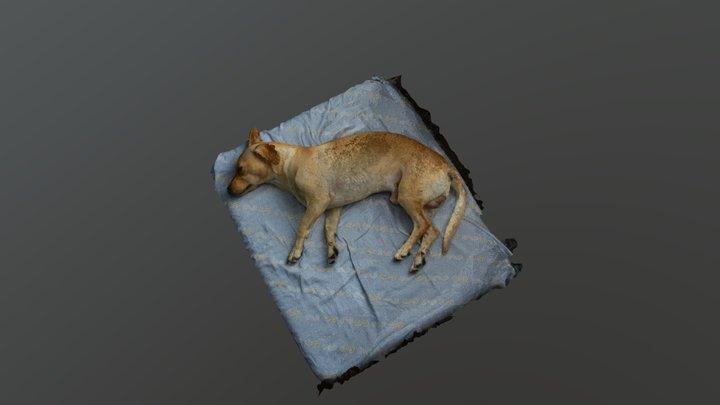 SmokeDog1 3D Model