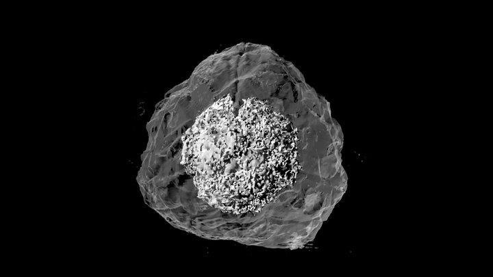 supernova: density 3D Model