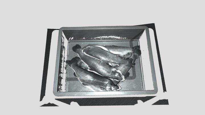 3D Scan: Fish 3D Model