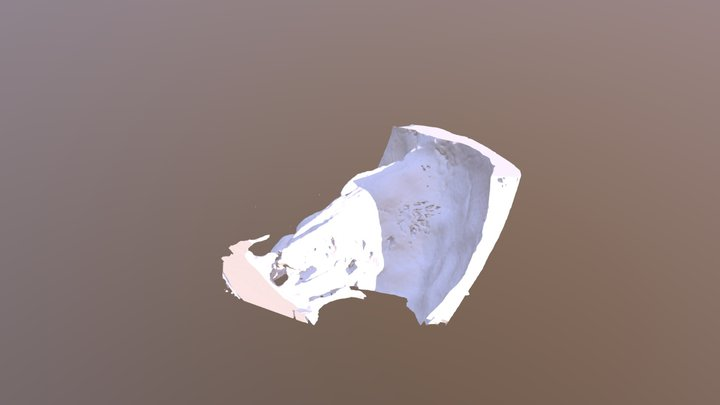 Temporal bone 3D Model