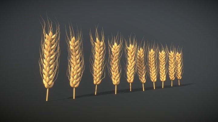 Wheat — FREE 3D Model