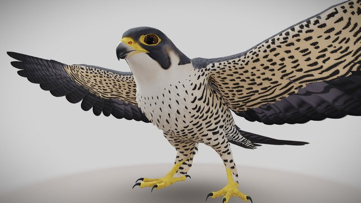 Peregrine Falcon 3D Model