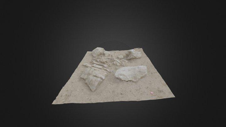Sep medium 3D Model