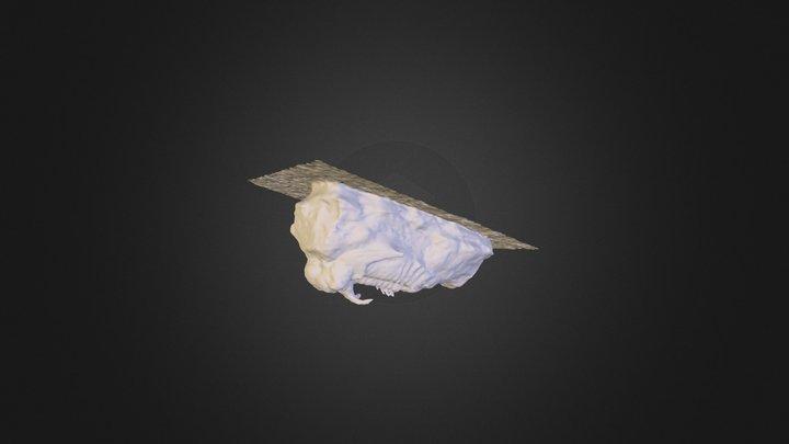 Trilobiet 3D Model