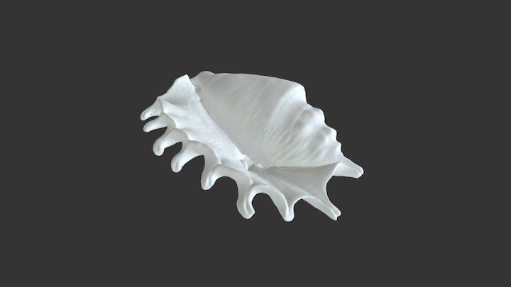 EinScan-S Shell 3D Scan 3D Model