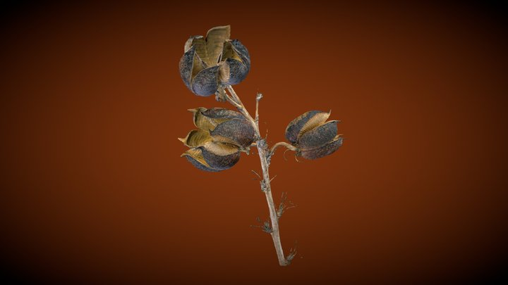 Red Yucca Seed Pods 3D Model