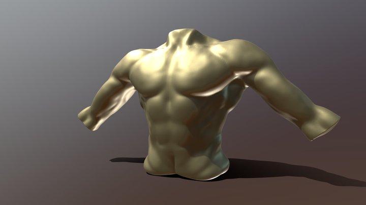 Male Torso Illustration 3D Model