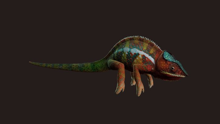 Chameleon with photorealistic textures 3D Model