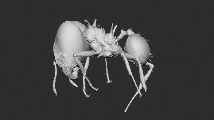 Pheidole viserion major worker 3D Model