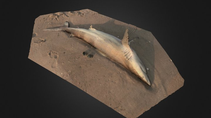 Save the Spinner Shark! 3D Model
