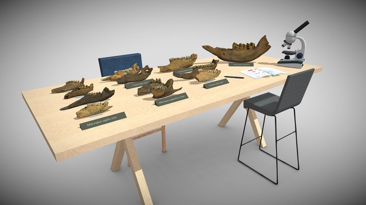 A range of megafauna fossils from Australia 3D Model
