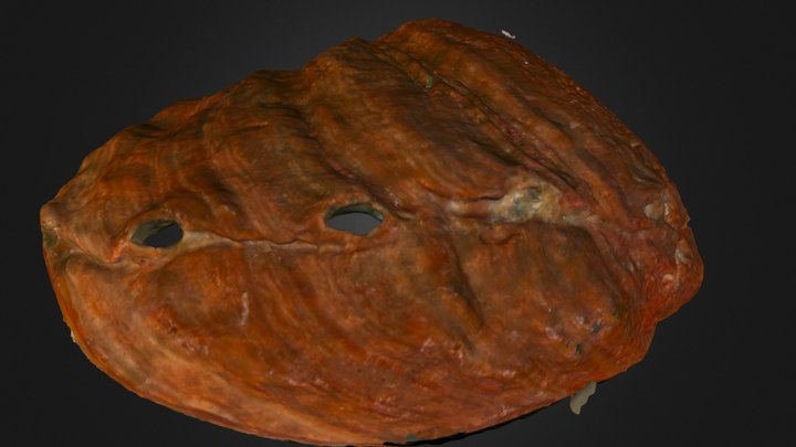 Red abalone 3D Model