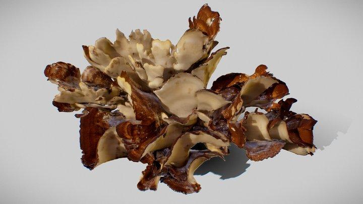 8K Big Mushroom - Meripilus Giganteus 3D Model
